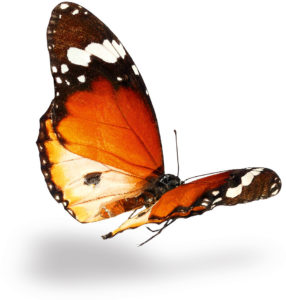 dcc-slider-home-1-butterfly